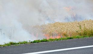 Wielkopolska. Seria groźnych pożarów. 30 zastępów straży pożarnej w akcji