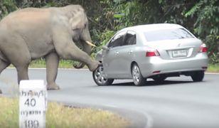 Słoń zaatakował mężczyznę, który próbował zrobić mu zdjęcie.