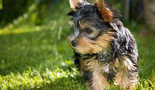 51-latek utopił dwa psy w pralce