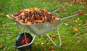 Jesienne prace w ogrodzie: grabienie liści, koszenie trawy...