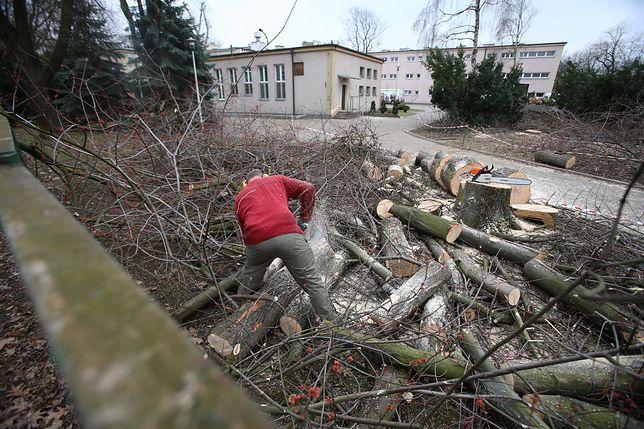 Wycinka drzew po nowemu. Andrzej Duda podpisał nowelizację. Kiedy nie potrzeba zgłoszenia do gminy?