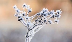 IMGW wydał ostrzeżenia. Zima znów pokaże kły