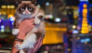 Grumpy Cat wygrała w sądzie. Dostanie 710 tys. dol. odszkodowania