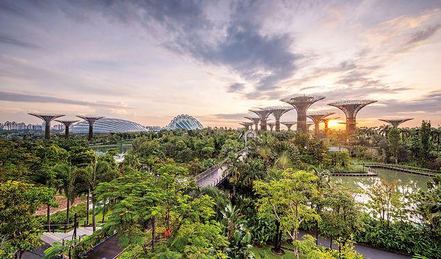 Singapur – nowoczesny i zielony naraz. Państwo pamięta o przyrodzie