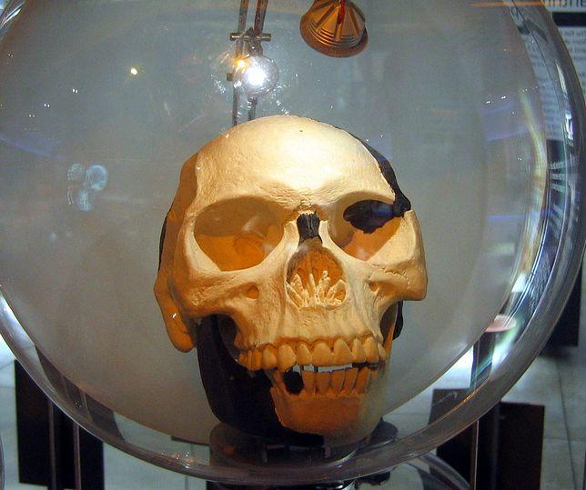 Człowiek z Piltdown - największe oszustwo w historii antropologii