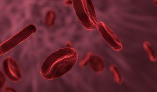 Koronawirus. Nowe badania w sprawie czynników ryzyka
