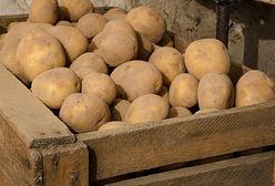 Drożyzna na bazarach. Jabłka i ziemniaki droższe, niż rok temu