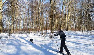 Zima 2021. Nie tylko biegówki, czyli nietypowe spotkania w gdańskich lasach