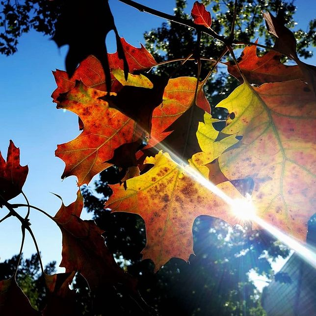 Pogoda dopisała. Jesień na Waszych zdjęciach wygląda zjawiskowo