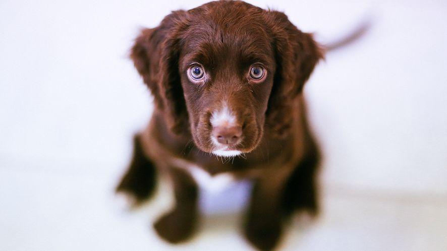 dlaZwierzaka.com – prostota i funkcjonalność dla posiadaczy zwierząt