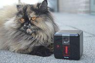 Petcube Play — druga generacja kamery do zdalnej zabawy ze zwierzakami