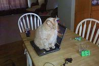 Dell z gorączką, czyli dlaczego warto zadbać o chłodzenie laptopa - Kot + laptop = śmierć dla urządzenia