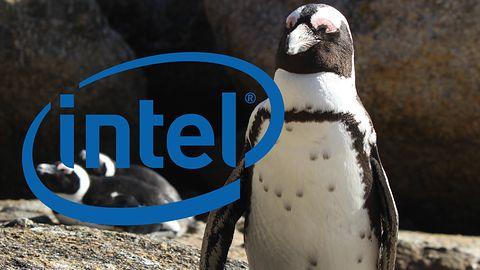 Intel romansuje z Fundacją Linux. Będzie udawać, że zależy mu na prywatności użytkownika