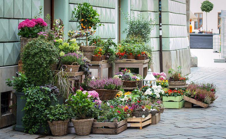 Przekręt w kwiaciarni w Wielkopolsce. Policja na tropie oszusta