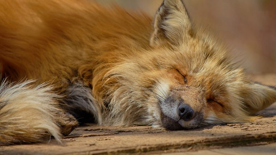 Nowy Firefox to spore zmiany dla biznesu i łatwa automatyczna instalacja