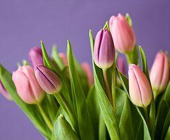 Genialny trik. Jak sprawić, by tulipany dłużej były świeże?