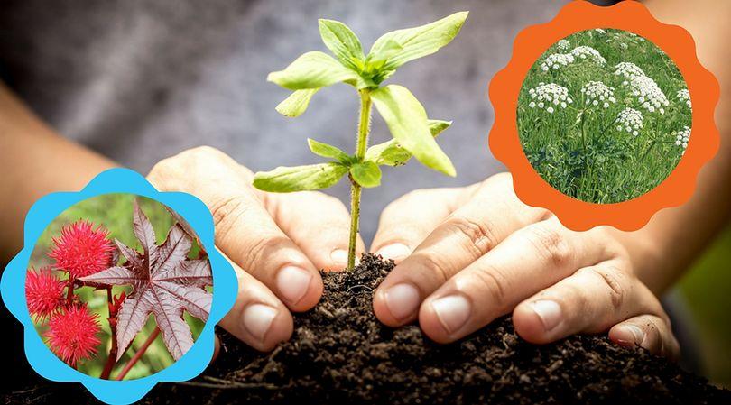 Niepozorne, zabójcze rośliny