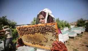 Uśmiercił 7,5 mln pszczół. Wystarczył jeden oprysk