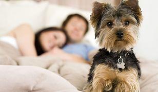 Tradycja, która dzieli obrońców zwierząt. Ta para w każdą rocznicę ślubu adoptuje psa