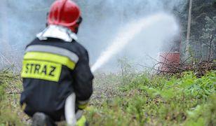 Strażak podpalił 7 lasów