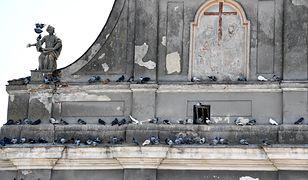 - Nigdy nie słyszeliśmy, by ptaki poraniły się o takie kolce - zapewniają hodowcy