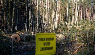 Mierzeja Wiślana: wycinka drzew
