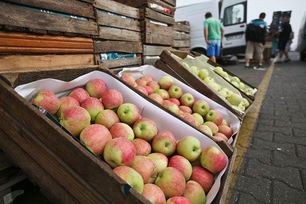 Sposób na rosyjskie sankcje - jeść więcej jabłek