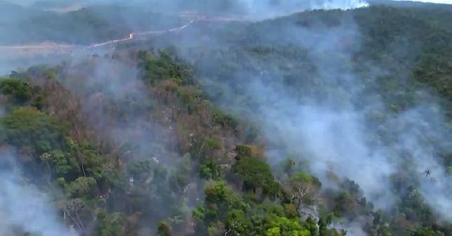 Amazonia. Trwa pożar największego lasu na świecie. Z żywiołem walczy 44 tys. żołnierzy