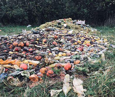 Warszawski Tarchomin. Na jednej z łąk ktoś urządził nielegalne wysypisko warzyw i owoców