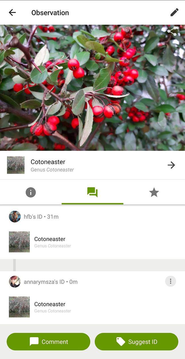 W czasie pisania artykułu jedna ze sfotografowanych przeze mnie roślin została zidentyfikowana ;)