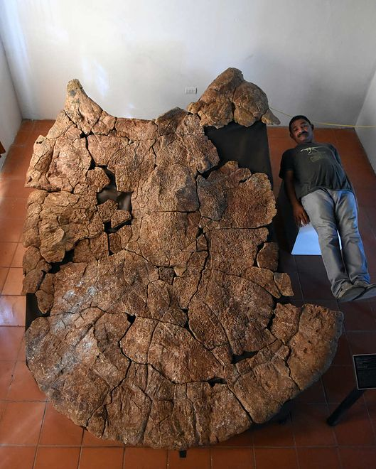 Żółw wielkości samochodu. Niezwykłe odkrycie naukowców