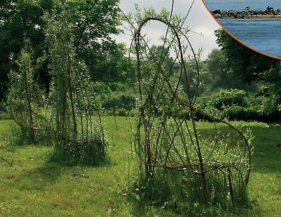 Nad Wisłą powstaną rosnące wierzbowe ławki?