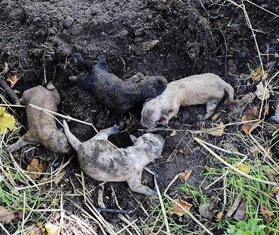 Sochaczew. Zakopane w ziemi szczeniaki