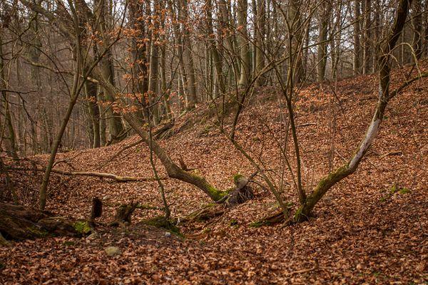 Najwyższy stopień zagrożenia w lasach