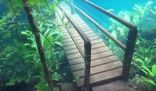 Rezerwat stał się podwodnym lasem. Wygląda zjawiskowo!