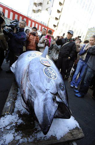 Kupił 269-kilogramową rybę. Kto to zje? - zdjęcia