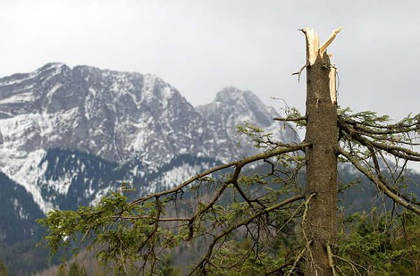 Zniszczenia w Zakopanem po wichurach