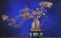 Sadzenie bonsai