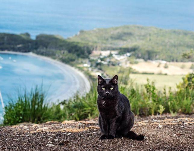 Willow, czarny kot Richego Easta, okazał się wspaniałym towarzyszem podróży przez Australię