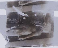 """Sekcja zwłok """"Obcego"""" z 1947 roku. Zdjęcie jest warte fortunę"""