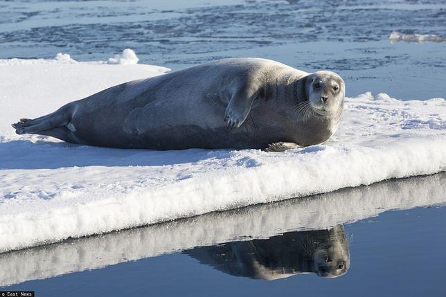 Naukowcy chcą poznać wpływ zmian klimatu na arktyczne ekosystemy.