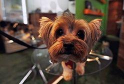 Restauracja dla psów