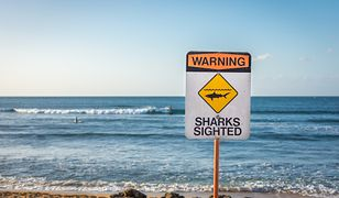 Rekiny  nie są jedynym niebezpieczeństwem czyhającym  na ludzi w głębokich wodach.
