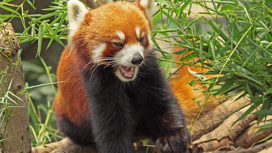 Firefox 35 to  pokoje czatowe w Hello i lepsza ochrona użytkownika