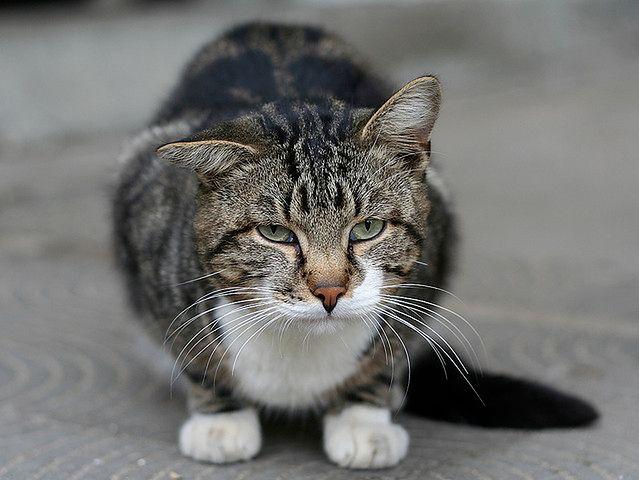 Nie ma hipoalergicznych kotów