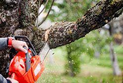 Planujesz wycięcie drzewa na działce? Zastanów się dwa razy