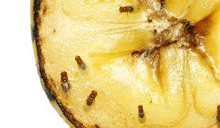 Skuteczne sposoby na muszki owocówki. Zobacz, jak się ich pozbyć
