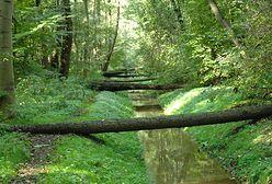Warszawa. Sprzątanie Lasu Bielańskiego. Przydadzą się każde ręce