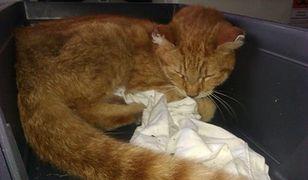 """Ekopatrol uratował potrąconego kota. """"Poszukiwała go zrozpaczona właścicielka"""""""
