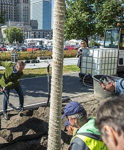 Warszawa. Zielona zmiana. 118 drzew zostanie posadzonych w Nowym Centrum Warszawy